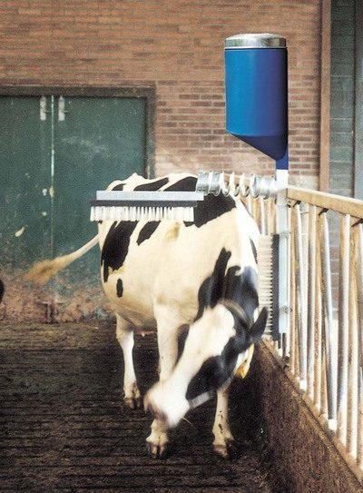 Cattle Brush with Pesticide Dispenser