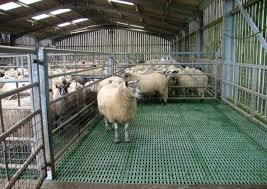 Sheep Equipment