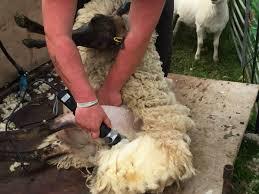 Clipping & Shearing