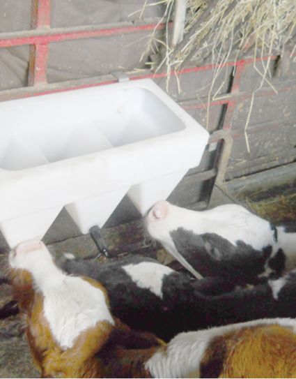 3 Teat Calf Milk Feeder