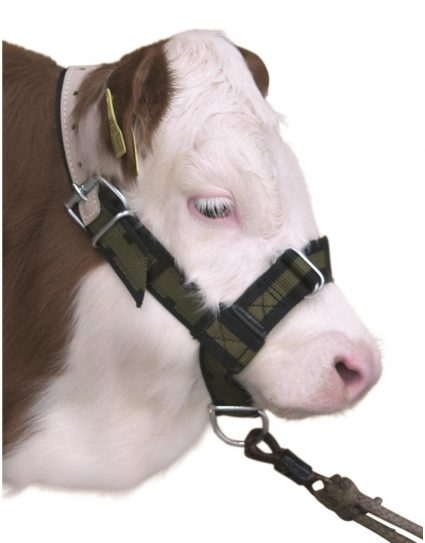 Cattle halters